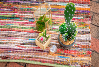 cactus, inspire, styled